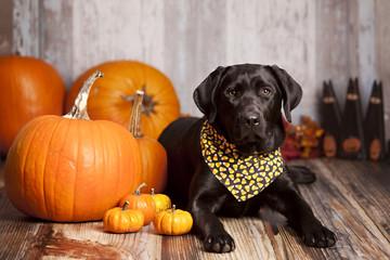 Fall Dog Portrait