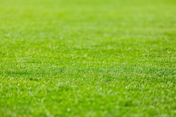 Soccer Field, Lawn, Grass.
