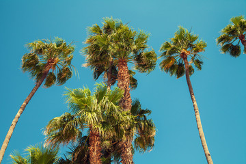 Retro landscape with tropical palm trees against sky