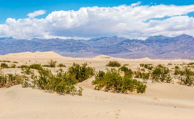 Mesquite Flat - Sand dunes