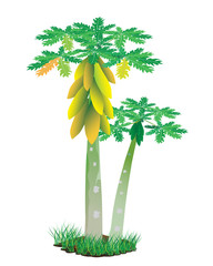 papaya plant vector design
