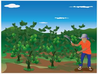 agriculturist harvest lemon in farm vector design