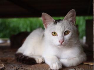 ベンチの下の猫