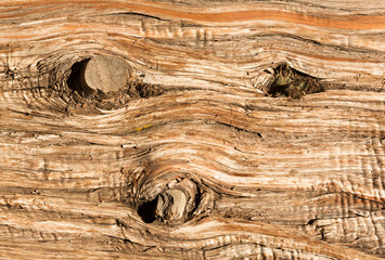Background close up of cedar trunk bark