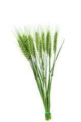 green ears of wheat