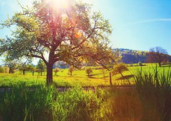 Scenic countryside landscape in picturesque summer valley in Germany with sun glare through a tree, Schwarzwald. Diffused, filtered.