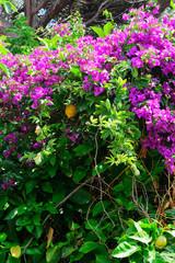 Mucchio di fiorellini viola e foglie verdi