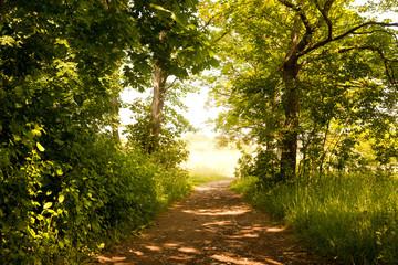 der Waldweg zum Napoleonstein Jena