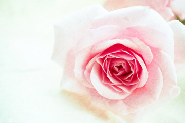 Sweet pink rose on mulberry paper texture for background