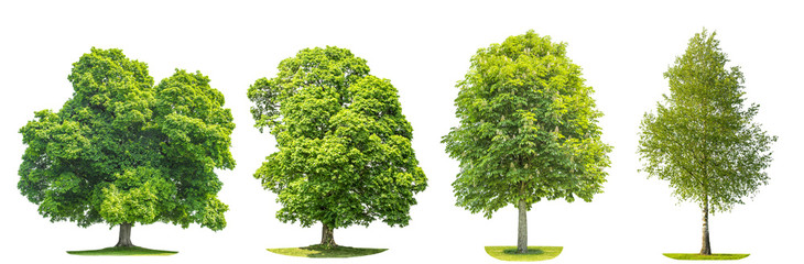Set of green trees maple, birch, chestnut. Nature objects