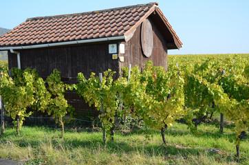 Hütte an einem Weinberg in Iphofen, Franken