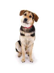 Junger Mischlingshund