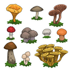 Various hand drawn colorful mushrooms set