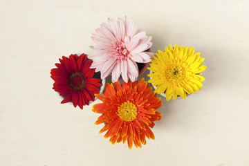 Colorful daisy flower background