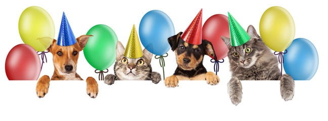 Wall Mural - Birthday Cat and Dog Banner
