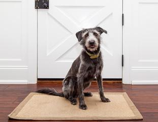 Dog Waiting By Front Door