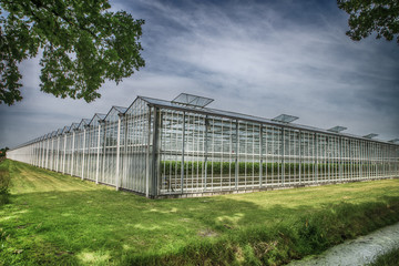 Fototapete - greenhouse with strawberries