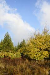 Wall Mural - Mountain Meadow in Autumn