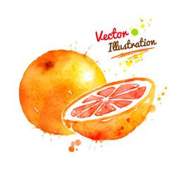 Watercolor grapefruit.