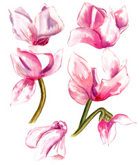 A vintage style watercolour drawing of pink flowers