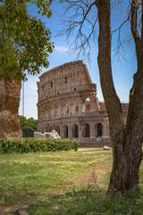 Colosseum in Rom hinter einem Baum