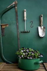 Pansies in enamel pot and gardening tools