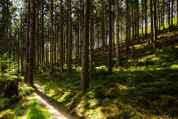 schönes Waldgebiet mit Weg mit durchscheinendem Mittagssonnenlicht