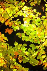 Bright autumn leaves, fall trees