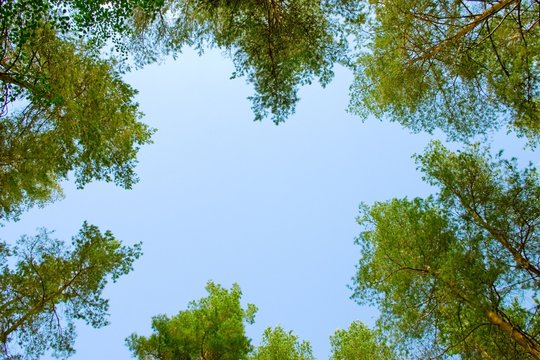 A shot looking up at the sky in forest