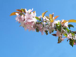 gałąź kwiatów