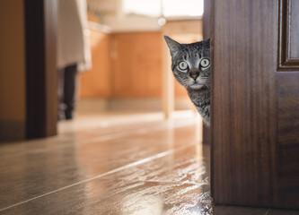Tabby cat hiding behind a door at home