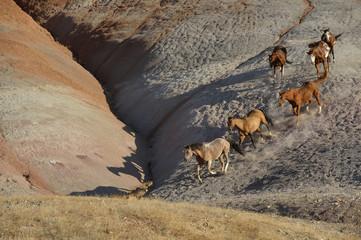 USA, Wyoming, six wild horses running in badlands