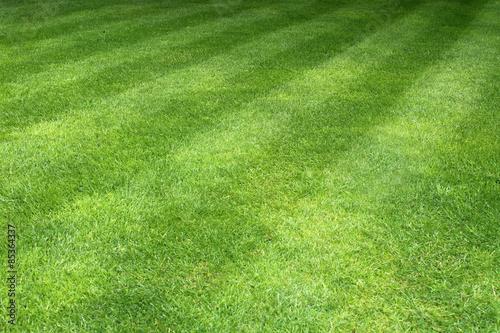 Pelouse avec traces de passages de tondeuse gazon for Pelouse tarif