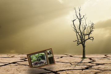 The campaign to reforest To reduce global warming,hands holding and caring a young plant on television or tv