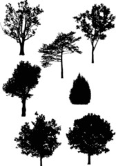 seven isolated different trees silhouettes