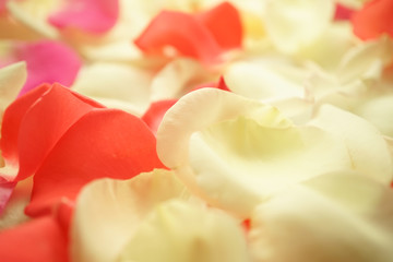 sweet color rose petals for romantic background