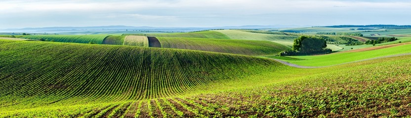 Photo sur Toile Sauvage Moravian rolling landscape with trees