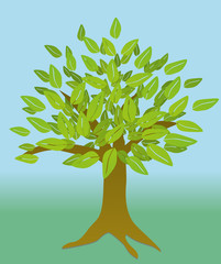 Tree, An illustration of a tree with leaves