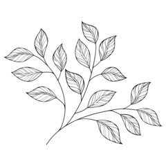 Vector Beautiful Monochrome Contour Leaf