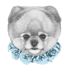 Original drawing of Pomeranian with floral wreath. Isolated on white background.