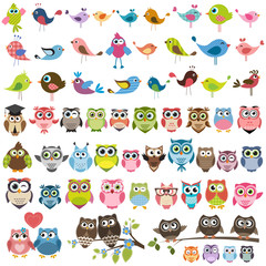 Foto op Plexiglas Uilen cartoon set of cartoon colorful birds and owls