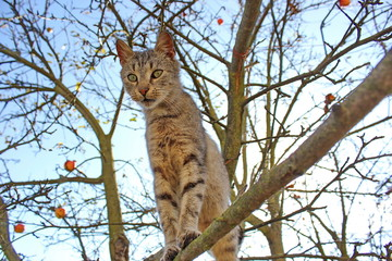 cat staying on branch of tree
