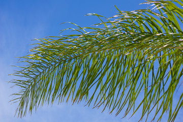 Curve of Palm Branch