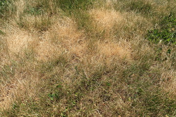Lawn scorched by the sun with dry, discolored grasses.