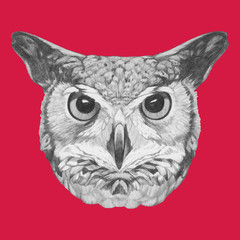 Hand drawn portrait of Owl. Vector isolated elements