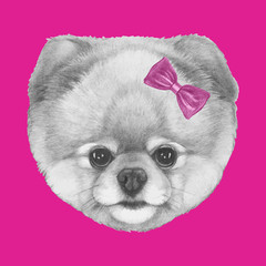 Hand drawn portrait of Pomeranian dog with bow. Vector isolated elements.