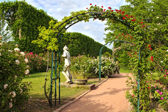 Roses garden in the Jardin de Plant in Paris, France. Eastern part of the garden with it's beautiful rose archways in May.