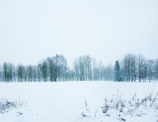 Verschneite Winterlandschaft mit Waldrand
