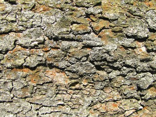 Detailed photo of lark bark structure