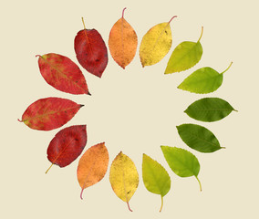 Circle of autumn Leaves